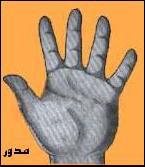 شکل کف دست و ویژگی شخصیتی هر فرد