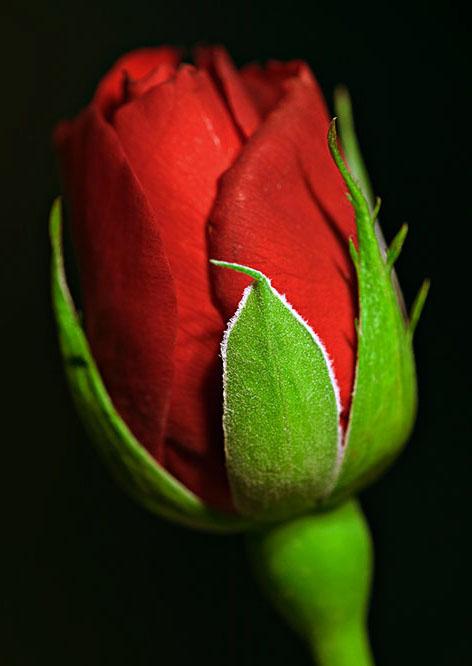 گالری زیباترین گل های طبیعی جهان
