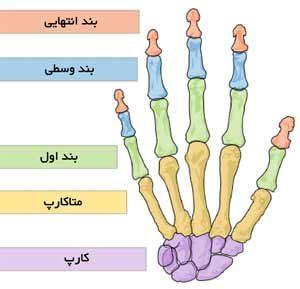 دیه یک انگشت دست عکس دست