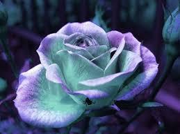 عکس چندین گل زیبا که در اشکالی باورنکردنی خودنمایی میکنند