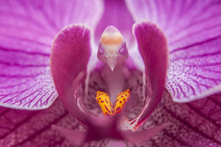 چندین گل زیبا که در اشکالی باورنکردنی خودنمایی میکنند -در این مطلب به سراغ تعدادی از گلهامیرویم.