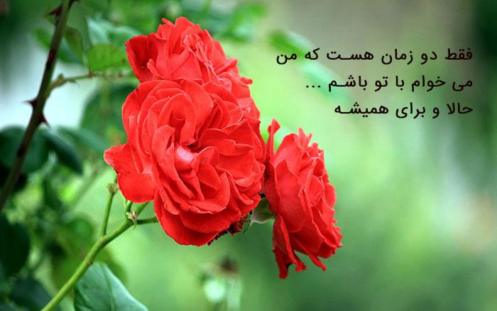 عکس پروفایل گل ،عکس پروفایل جدید در پورتال جامع فرانیاز فراتر از نیاز هر ایرانی