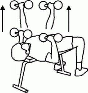 ورزش جهت حجیم شدن بالاتنه