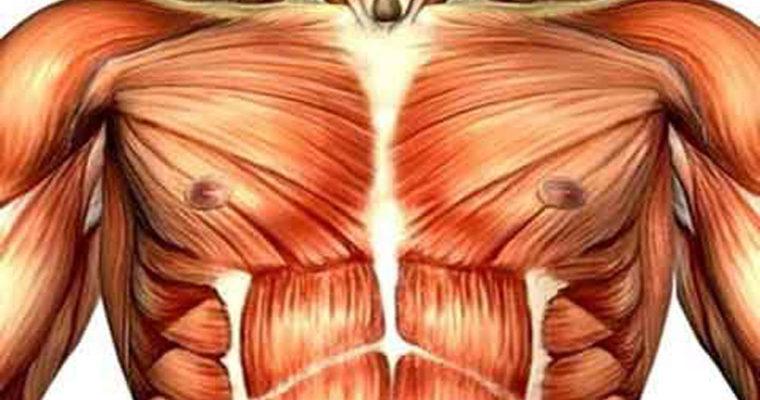 روشهای ساده برای افزایش سایز سینه در خانم ها
