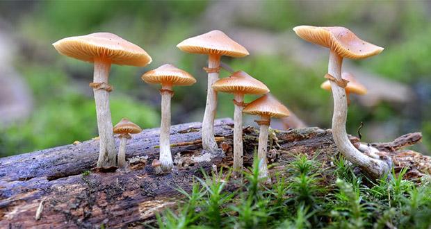 عکس درمان افسردگی با قارچ های جادویی