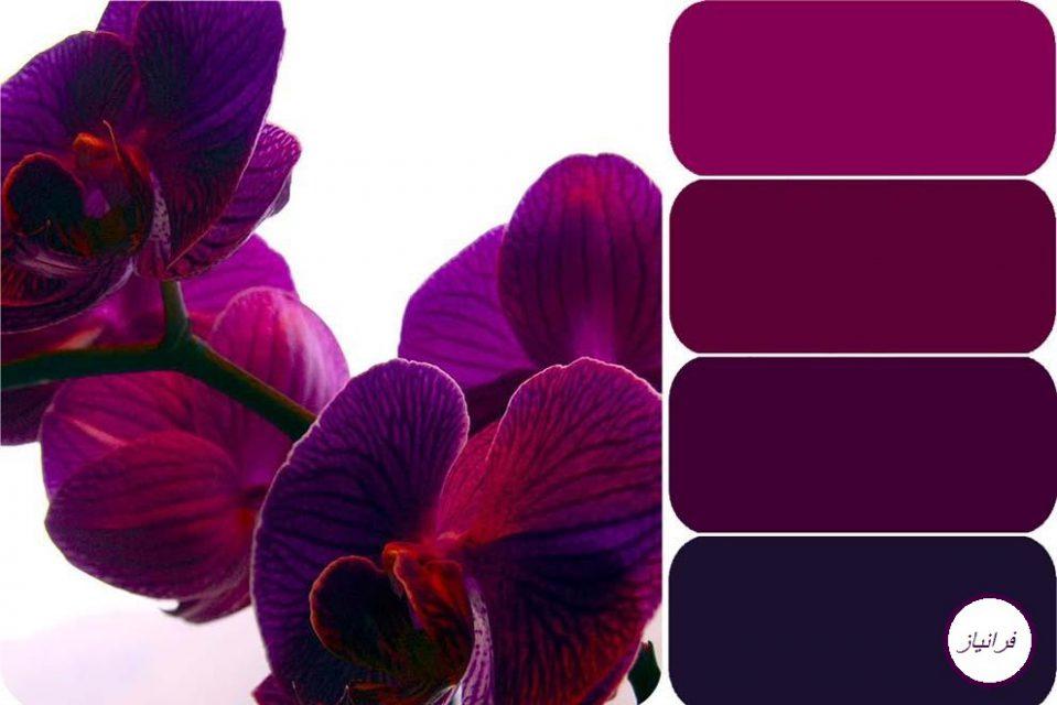 عکس اصول کلی استفاده از رنگ بنفش