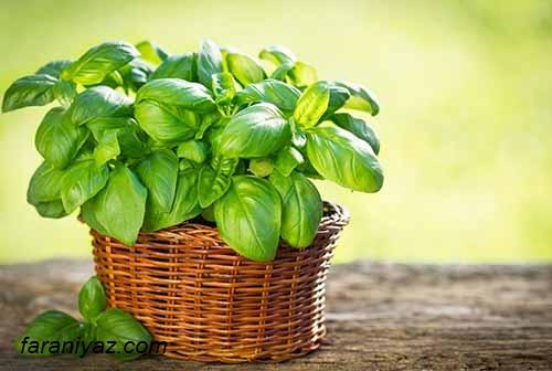 گیاهان دارویی برای درمان ورم معده