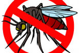 راهنمای ایده ال برای رهایی از شر حشرات : سوسک و پشه و باقی رفقا