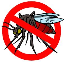 راهنمای ایده ال برای رهایی از شر حشرات